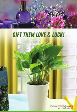 Home & Kitchen offers in the BookMyFlowers catalogue ( Expires today)