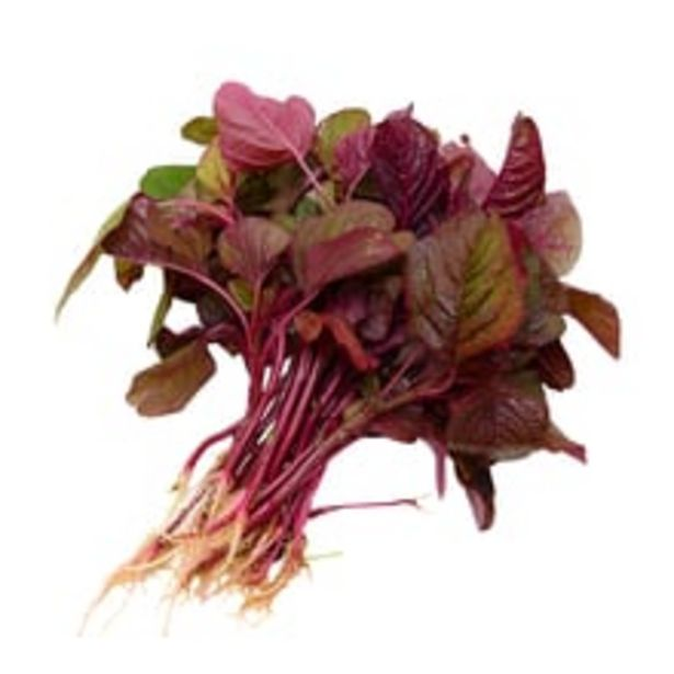 Amaranthus Red offer at ? 10
