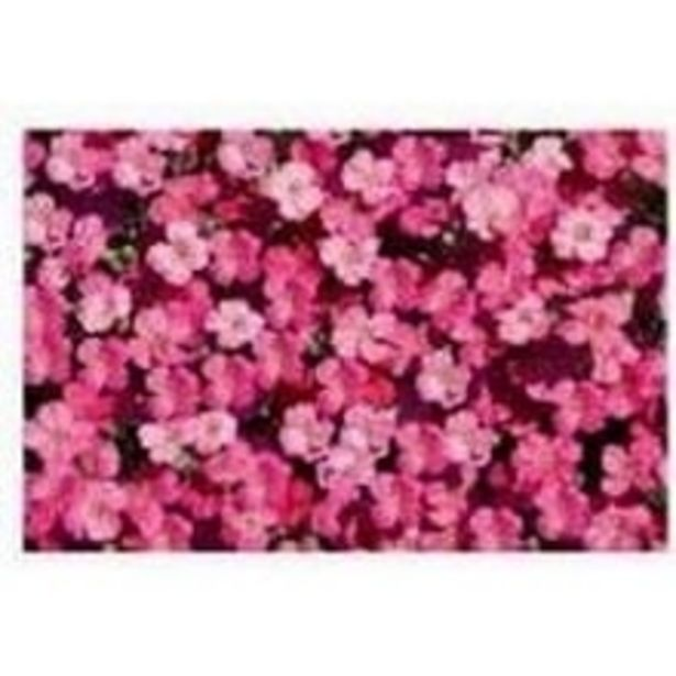 Table Mats - DSN-03 offer at ? 124.5